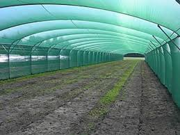 Shade Net For Greenhouse One Plastic Netting In Agriculture