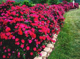 flower garden ideas full sun garden