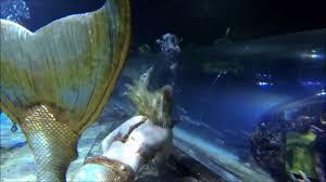 mermaid sharks at deep sea world