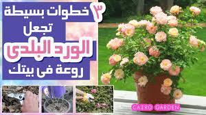 ٣ افكار جميلة و سهلة تجعل الورد البلدي او الجورى يزهر عندك فى