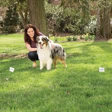Amazon Com Petsafe Boundary Flags Wireless Pet Fence Products Pet Supplies