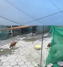 Bold Line Garden Fence Mesh Safety Poultry Farming And Pets Simple Breeding Fishing Net Catching Bird Nets Of Drop Shipping A460