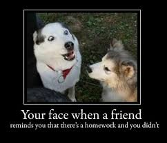 funny image collection funny disney dogs quotes