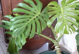mejores plantas de interior plantas