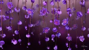 flowers purple flowers wallpapers hd