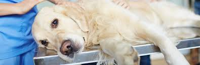 t tips for dogs with bladder stones