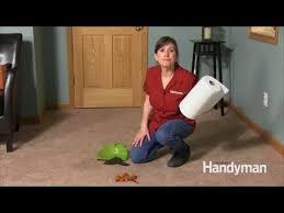 get dog cat urine out of carpet you