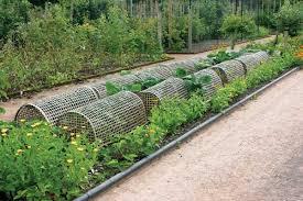 garden beds organic gardening