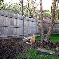 Existing Fence Conversion System Kit For Cats In 2020 Cat Fence Cat Proofing Outdoor Cat Enclosure