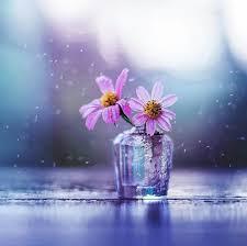 Pin By صور خلفيات On صور ورد Flower Wallpaper Flower Photos