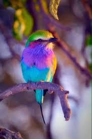 Blog de Martine (Petite Louve) Introduction | Oiseaux, Oiseaux ...