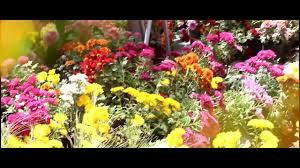 حديقة الاورمان صور ورد جوري زهور الربيع اجمل ورد Youtube