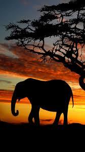 elephant 720x1280 wallpaper id