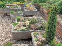 growing alpines in troughs sinks and