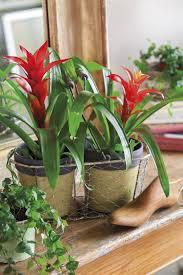 plantas de interior con flor y