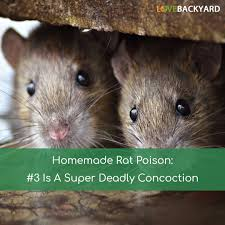 homemade rat poison 3 is a super