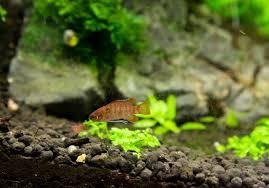 28+ Welche Fische Für Nano Aquarium Pics