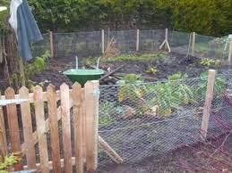 Rabbit Proof Fencing Around Vegetable Patch Youtube