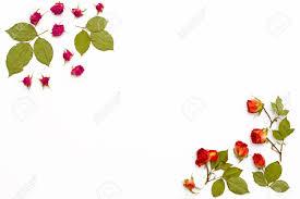 Marco De Rosas De Flores Sobre Un Fondo Blanco Modelo De Flor