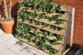 pallet used as strawberries garden