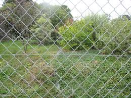 Fence Wire Mesh Garden Of The House Stock Photo Download Image Now Istock