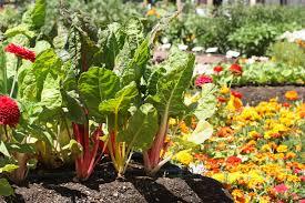 vegetable garden tips granbury homes