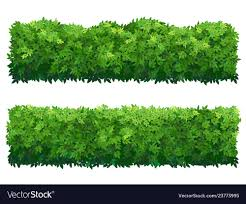Green Fence From Boxwood Shrubs Ornamental Plant Vector Image