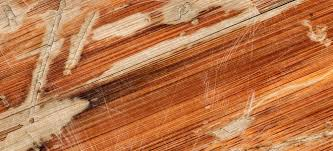 how to repair buckled laminate flooring