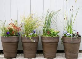 growing plants in pots and containers