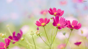 63 beautiful flowers wallpapers on