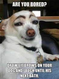16 Funniest and cute Dog Memes stupid face