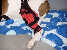 dog knee brace experiences do braces