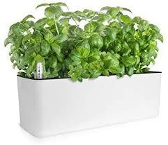 growled self watering planter pots