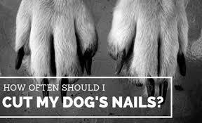 how often should i cut my dog s nails