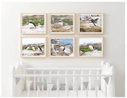 Puffin Photography Print Set Of Six Nursery Decor Gallery Etsy
