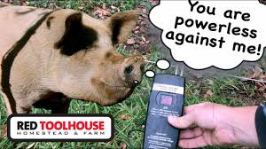 Low Electric Fence Voltage What S Wrong Youtube