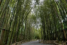 Invasive Bamboo Rethink Planting It In Your Garden Hgtv