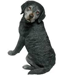 sandicast original size black labrador