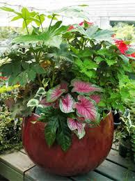 fabulous foliage shade container garden