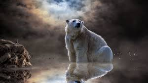 polar bear moon reflections man