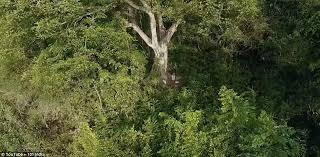 Jadav Payeng spent almost 40 years making a forest on Majuli, India –  HienaLouca