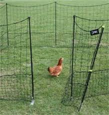 Verplaatsbare Kippenren Kip Hek Kippen Houden Achtertuin Kippen