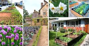 15 vegetable garden ideas front yard