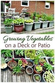 vegetable garden on a deck tips for