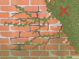 Simple Ways To Grow Ivy On A Brick Wall 14 Steps With Pictures