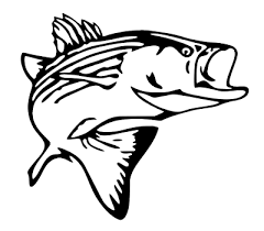 Striper Decal Rockfish Fishing Decal For Truck Car Window Outdoor Boat Etc Ebay