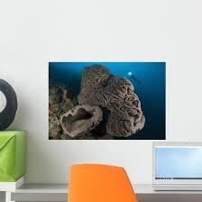Salvador Dali Sponge With Wall Decal Design 5 Wallmonkeys Com
