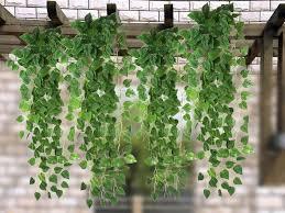 garden plant simulation hanging vine