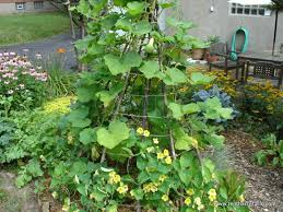 Choose The Right Trellis For Your Climbing Vegetables Tenth Acre Farm