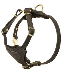 small leather bullmastiff harness for